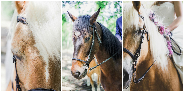 20-wedding-horses